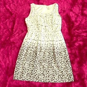Ann Taylor LOFT Black & White Dress